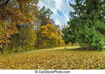 forest in autumn - Lithuanian landscape come the fall when...