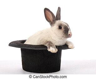 Rabbit Trick - Cute bunny rabbit climbing out of a black hat