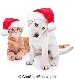 Christmas Pets Dog and Cat - Cute Christmas pet Labrador dog...