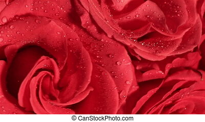 Beautiful bouquet of red roses with a rotating reverse -...