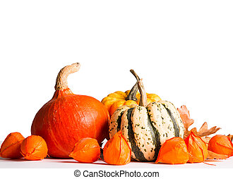 autumn - Pumpkin and flower isolated on white background,...