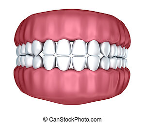 Human denture 3D image, isolated on white