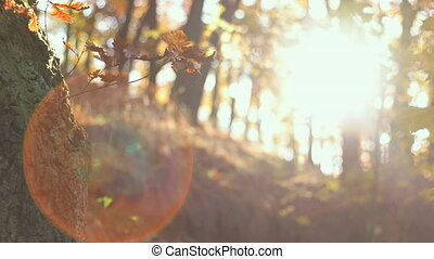 Fall Season in the Forest - Static tranquil forest with...