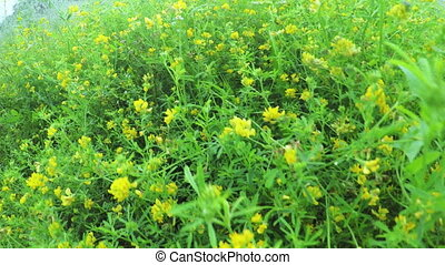 Wildflowers in field - Under high wildflowers staggering...