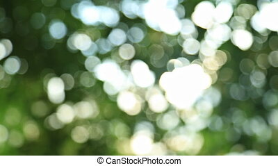 Sunny abstract green nature background, HD