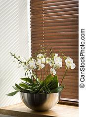 flowers on the windowsi