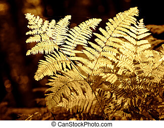 ferns in autumn light