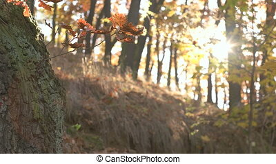 Fall Season in the Forest - Calm tranquil forest scene with...