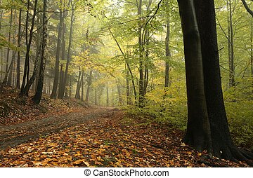 Forest trail in foggy autumn day - Forest trail in foggy...