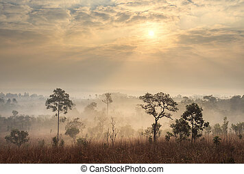 Thailand savanna landscape at sunrise
