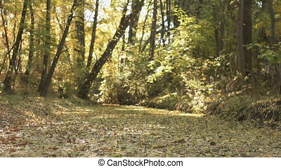 Fall Season in the Forest - A tranquil look at the river...