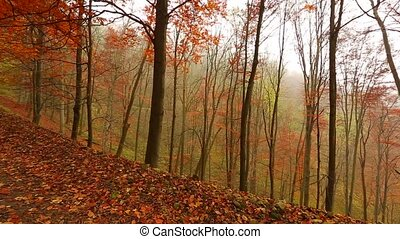 Autumn forest path - Forest with colorful autumn leaves