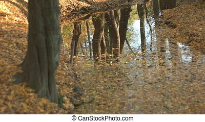 Fall Season in the Forest - A static look at the reflection...