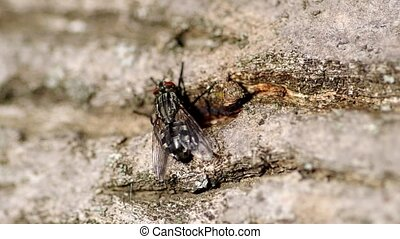 Fly on tree bark - Fly on the bark of a tree in the garden