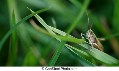 Grasshopper on the green grass in autumn