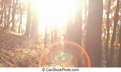Fall Season in the Forest - Differentiated swinging camera...