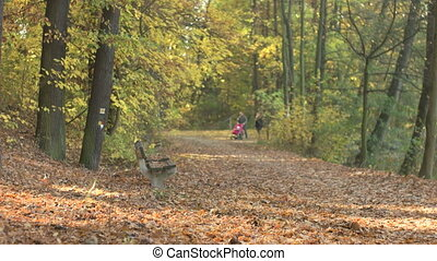 Fall Season in the Forest - Family with the stroller walking...