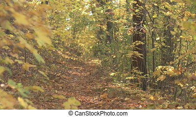 Fall Season in the Forest - Young man walking on the forest...