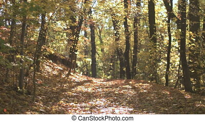 Fall Season in the Forest - Young man riding on the bycicle...