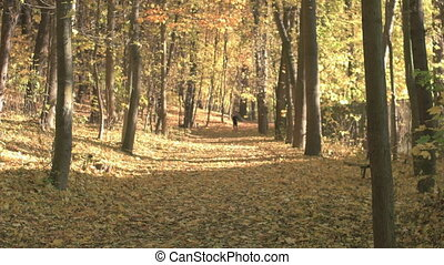 Fall Season in the Forest - Young man excercising in the...