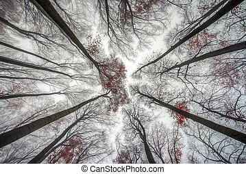 Mighty trees standing in the enchanted forest - Photo Mighty...