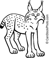 Lynx - vector line drawing of a lynx