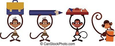 Four isolated monkey
