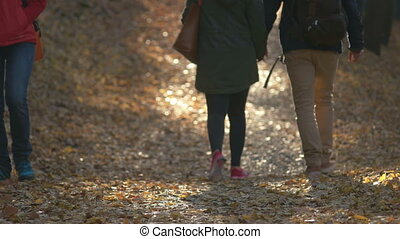 Fall Season in the Forest - A detail of couples legs while...
