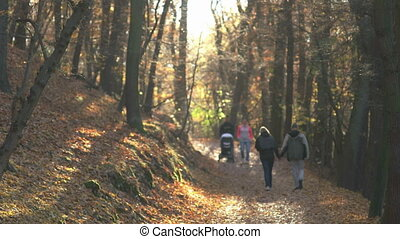 Fall Season in the Forest - Two couples walking in the...