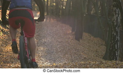 Fall Season in the Forest - Young adult riding his bycicle...