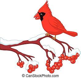 Cartoon beautiful cardinal bird - Vector illustration of...