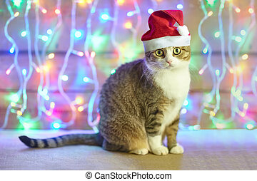 cat in Santa Claus xmas red hat on bright bokeh background