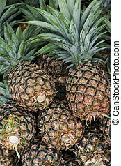 Pineapple (Ananas comosus)  - Freshly picked pinneapples