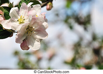 春天, 背景
