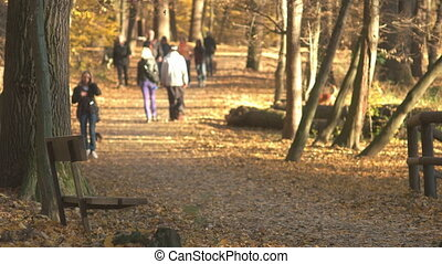 Fall Season in the Forest - People walking in the public...