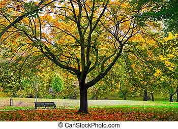 Autumn Park Bench - Autumn in the Park with park bench and...