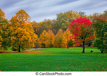 Autumn in the Park with colorful trees