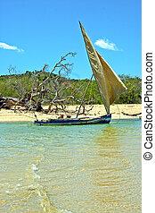 pirogue beach seaweed indian madagascar - pirogue beach...