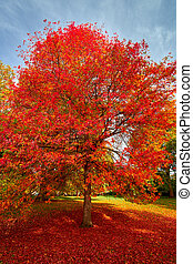 Autumn tree in the Park - Autumn in the Park with colorful...