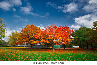 Autumn Landscape - Autumn in the Park with colorful trees