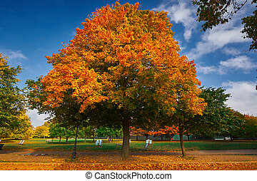 Autumn Trees - Autumn in the Park with colorful trees