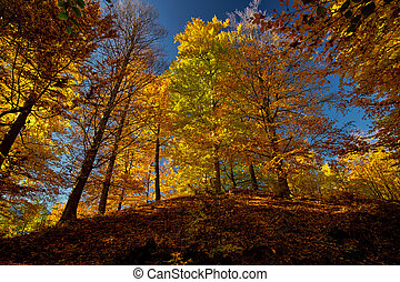 Autumn Forest - Autumn in the forest with colorful trees