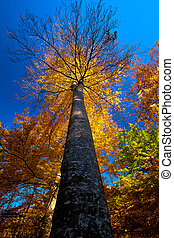 Autumn Forest Tree - Autumn in the forest with colorful...