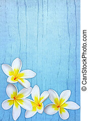 Frangipani on Blue - Frangipani or plumeria flowers, over...