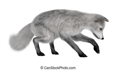Arctic Fox - 3D digital render of an arctic fox isolated on...
