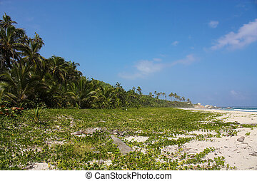 Caribbean beach with tropical forest. Tayrona National Park....