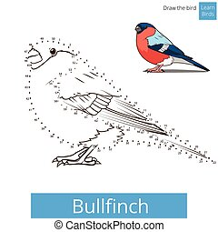 Bullfinch bird learn to draw vector - Bullfinch learn birds...