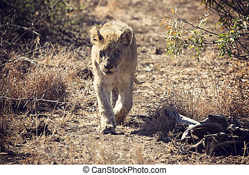 Artistic conversion of a lion cub walking along wild path