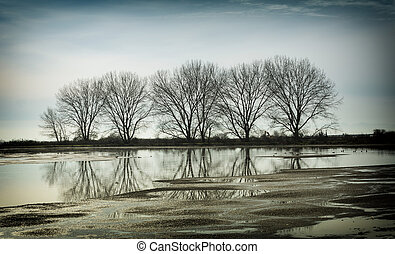 tree reflection in a pond, vancouver bc canada