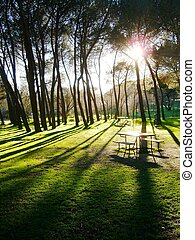 "Sunset in an old park - Sunset in old park \""Casa de..."